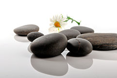 Zen stones. On white background with white flower Royalty Free Stock Photography