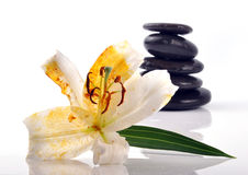 Zen stones. Lilly spa with zen stones Royalty Free Stock Photos