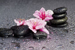 Zen stones. With flowers and some water drops Stock Image