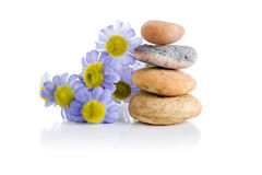Zen stones. End flowers on white background Stock Photography
