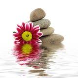 Zen stones. Zen spa stones with flowers Royalty Free Stock Photography