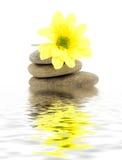 Zen stones. Zen spa stones with flowers Stock Image