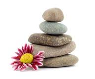 Zen stones. Zen spa stones with flowers studio isolated Royalty Free Stock Photo