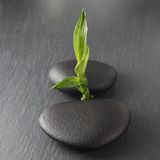 Zen stones and bamboo. On the black royalty free stock photo