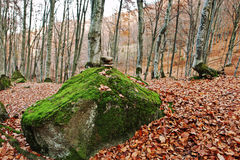 Zen stones on big stone with moss on autumn forest. Royalty Free Stock Photos