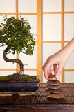 Zen stones and bonsai Royalty Free Stock Photos