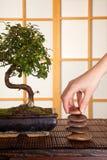 Zen stones and bonsai. Hand stacking zen stones in a japanese interior with shoji sliding windows and bonsai tree Royalty Free Stock Photos