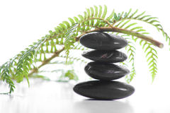 Zen stones with a fern Stock Photos