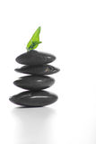 Zen stones with a fern Royalty Free Stock Image