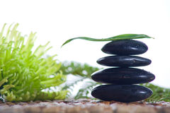 Zen stones with a fern Royalty Free Stock Photography