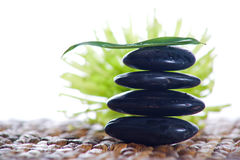 Zen stones with a fern Royalty Free Stock Photos