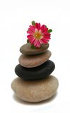 Zen stones with flower. Isolated on a white background Royalty Free Stock Image