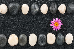 Zen stones and flower with water drops Royalty Free Stock Images