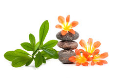Zen stones with flowers and green plant. On white background Stock Images