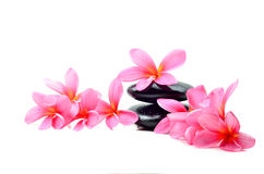 Zen stones with frangipani flower Royalty Free Stock Photography