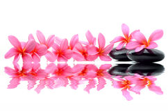 Zen stones with frangipani flower Royalty Free Stock Images