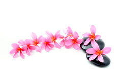 Zen stones with frangipani flower. Isolated on white Royalty Free Stock Image