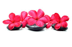 Zen stones with frangipani flower Stock Photos