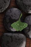 Zen stones and ginko biloba leaves with water drops Stock Photography