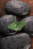 Zen stones and ginko biloba leaves with water drops Royalty Free Stock Photo