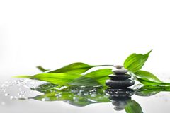 Zen stones and green bamboo. Background of a spa with stones, and a sprig of green bamboo Stock Photos