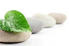 Zen stones with leaf Royalty Free Stock Image