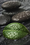 Zen stones and leaves with water Royalty Free Stock Photo