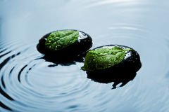 Zen stones and leaves in water Stock Photos