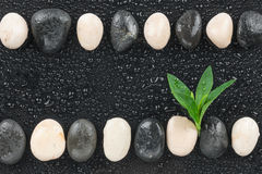 Zen stones and leaves with water drops Royalty Free Stock Photo