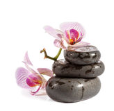 Zen stones with orchid and ladybird. Royalty Free Stock Photos