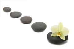 Zen stones with orchids flower. spa background. Zen stones with orchids flower isolated. spa background Royalty Free Stock Image