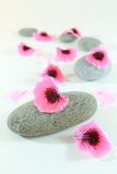 Zen stones path. Zen path with grey stones and pink petals. Spa concept Royalty Free Stock Images