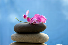 Zen stones with a pink flower Royalty Free Stock Image