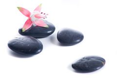 Zen stones with pink flowers Stock Photos