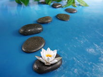 Zen stones in water. Zen stones in blue water with lily Stock Images