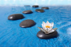 Zen stones in water. Zen stones in blue water with lily Royalty Free Stock Photo
