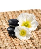 Zen stones with white flowers Royalty Free Stock Image
