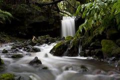 Zen Stream. Natural stream in pico island azores, Portugal stock images