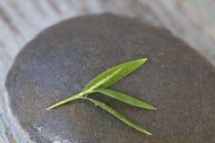Zen style still life bamboo leaf on pebble. Zen style still life with delicate bamboo leaves stock photo