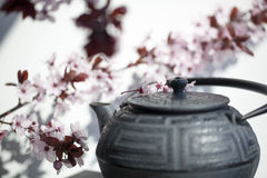 Zen tea time for fengshui and meditation. Traditional Japanese teapot with cherry blossom flowers for zen and relaxation Royalty Free Stock Photos