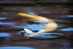 Zen-Teich Hintergrund Lizenzfreies Stockbild