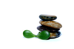 Zen therapy. Spa stones with a leaf on a white background Stock Images