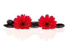 Zen Treatment Royalty Free Stock Images