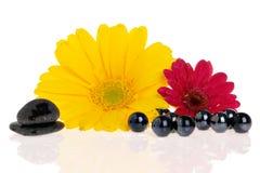 Zen Treatment Royalty Free Stock Photo