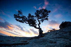 Zen tree. Silhouette of a lone tree Zen in the high mountains at sunset royalty free stock image
