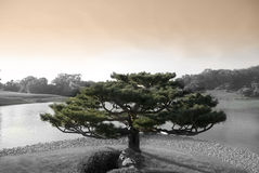 Zen Tree. In japanese botanic garden with lake