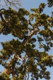 Zen Tree Stock Photography