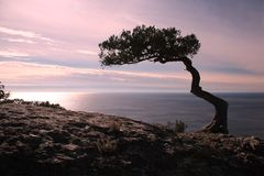 A tree on the cliff rocks and sunset over the sea Royalty Free Stock Images