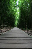 Zen walking path in forest Stock Photos