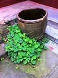 Zen Water Tank dans un temple Photo stock